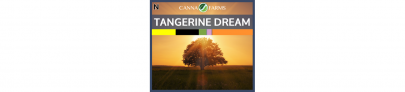 Tangerine Dream Sativa Dom | Canna Farms