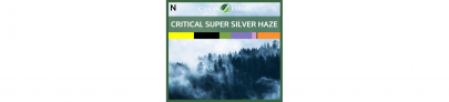 Critical Super Silver Haze Sativa | Canna Farms