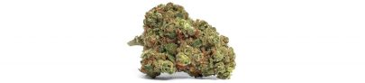 Tropical Breeze Indica | SYNR.G